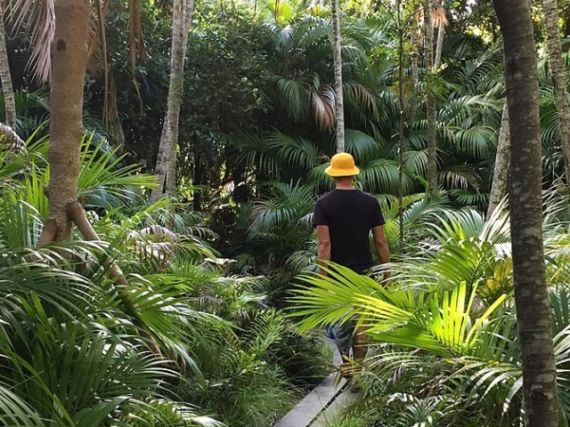 Man walking through rainforest