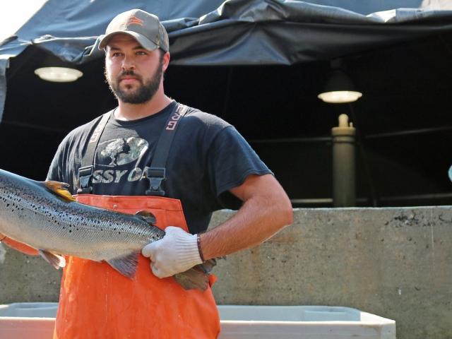 Salmon farmer holding salmon