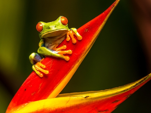 frog on a red plant