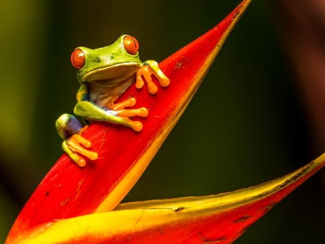frog on a red plant: credit:-zdenek-machacek-unsplash_cropped
