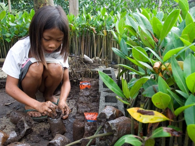 Planting mangrove seedlings in Indonesia