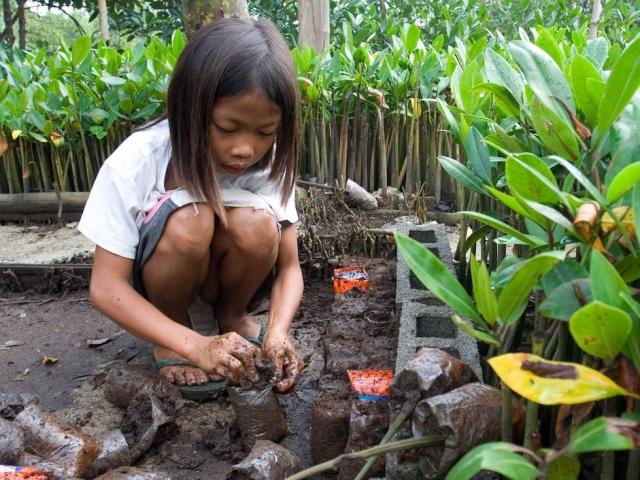 child planting mangroves