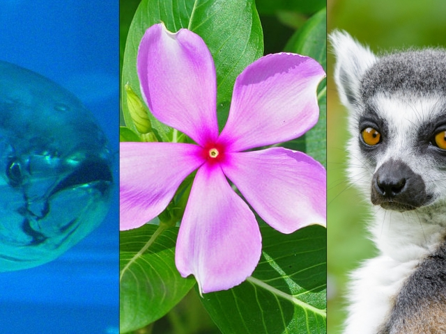 a fish, pink flower, and lemur