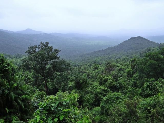 Rwanda Forest