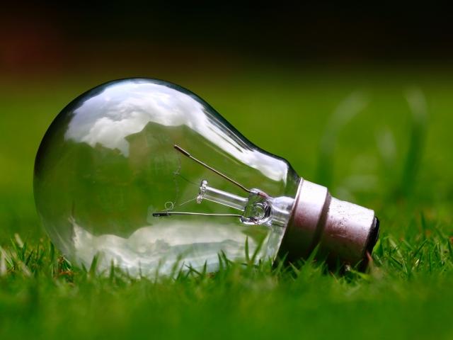 light bulb lying in grass