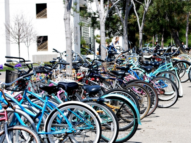 Dozens of bikes parked at university