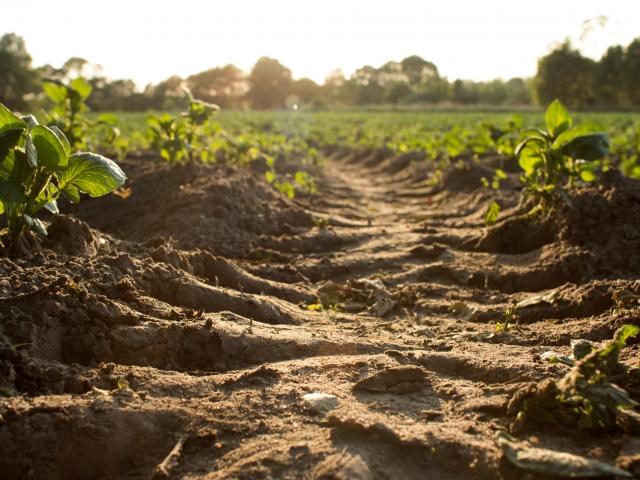Soil in a crop field