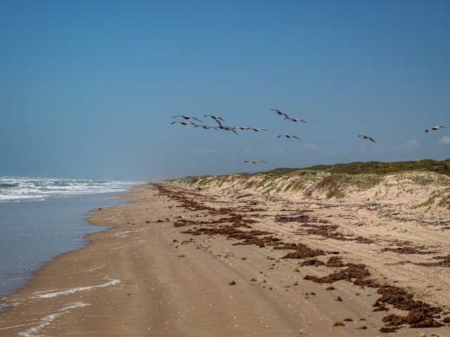 Beach and flock of gulls flying in air