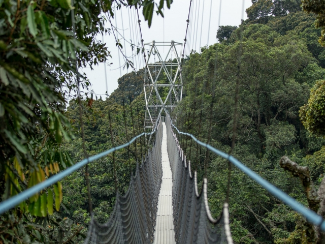 A bridge above the canopy of a rainforest
