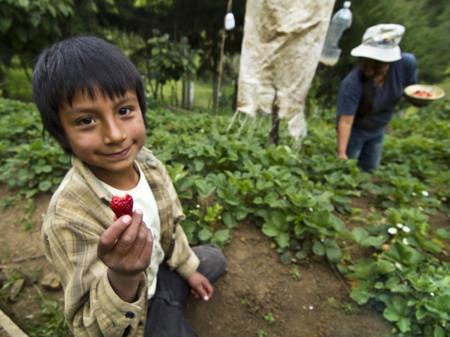Boy holding strawberry and sitting on ground