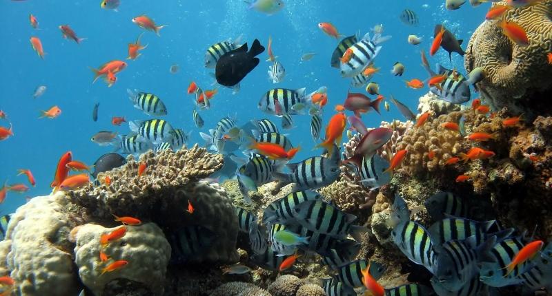 underwater fish and coral scene