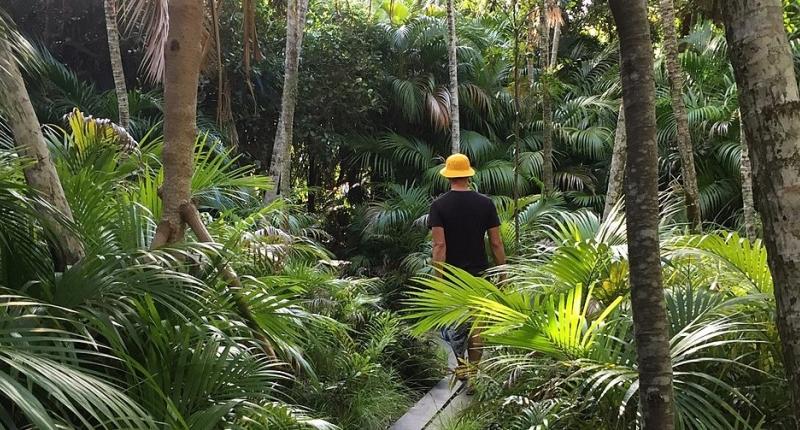 Man walking through rainforest