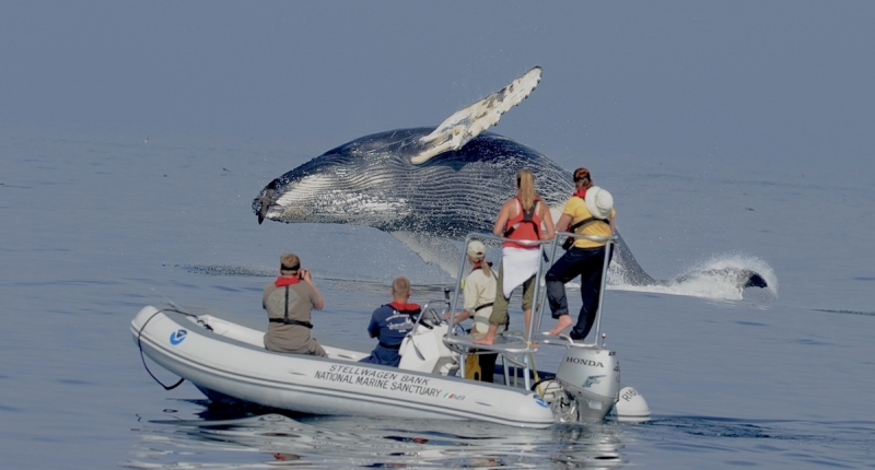 people observing a humpback whale