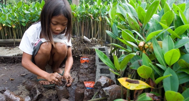 planting mangrove seedlings USAID