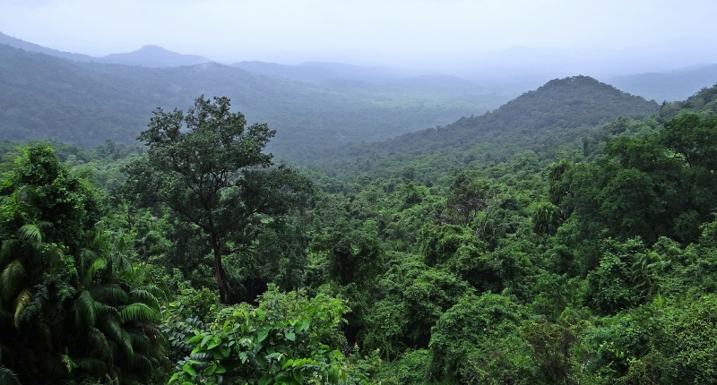 Rainforest in Rwanda