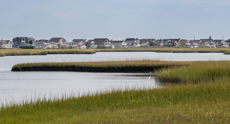 Coastal wetland with houses in background and bird in foreground
