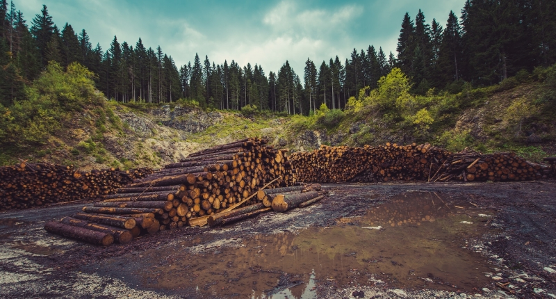pile of logs with forest in background