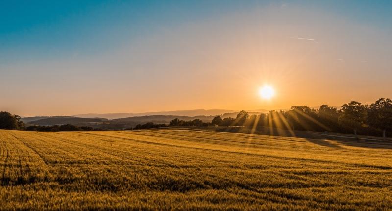 Sun shines over a farm field