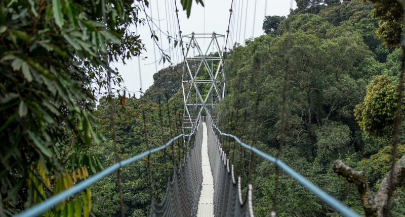 a view from a canopy walk