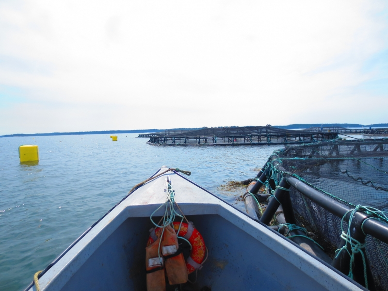 Boat and salmon farm pens in the ocean