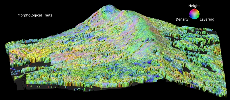 Digital image showing forest biodiversity on a mountain