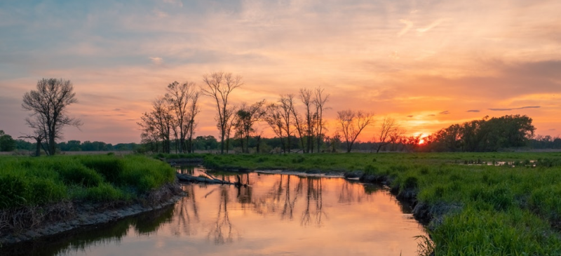sun setting in a wetland