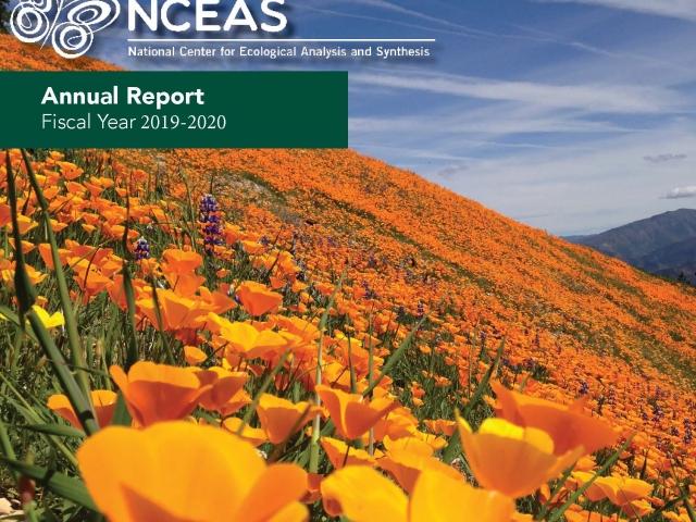 Annual report in poppy field